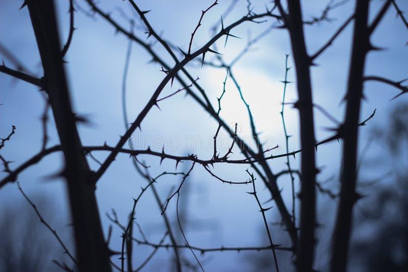 Загадочные страшные деревья ветвей, винтажные цвета стоковая фотография rf