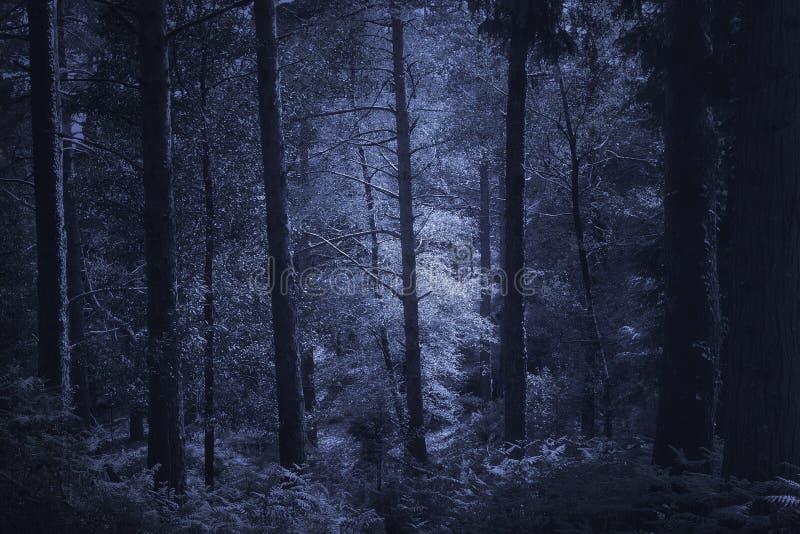 Загадочный глубокий лес стоковое изображение