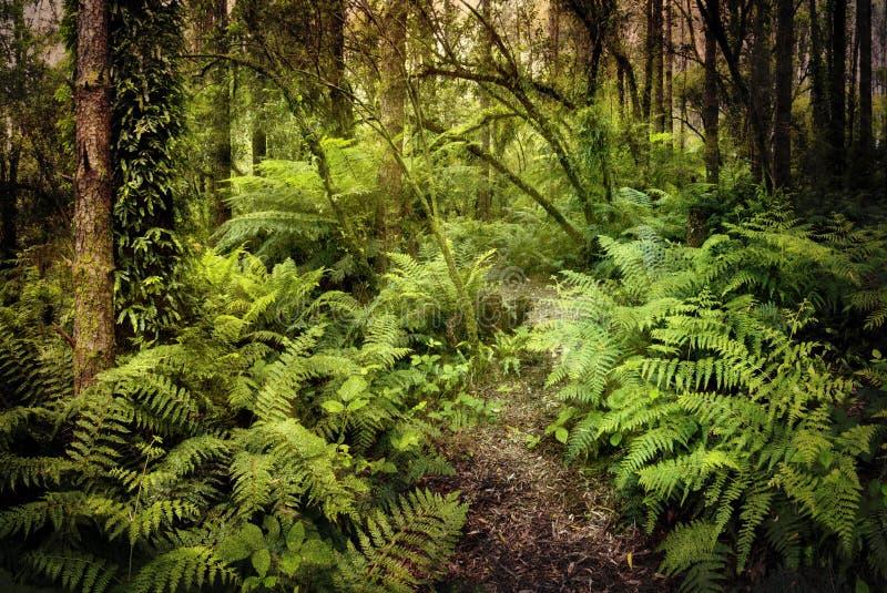 загадочный дождевый лес стоковая фотография rf