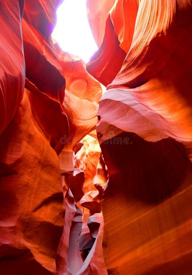 Загадочный и чудесный каньон 4 антилопы стоковые изображения rf