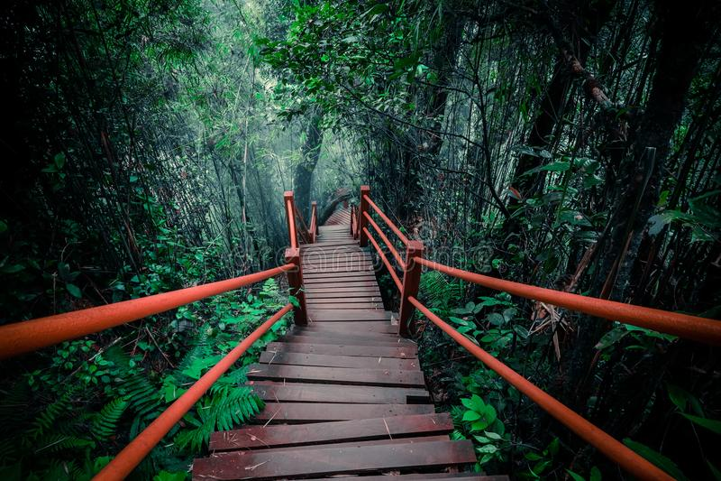Загадочный ландшафт туманного леса с деревянным мостом стоковая фотография rf