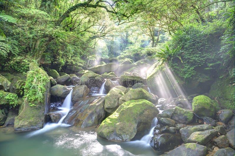 Загадочная промоина сочного леса и освежать каскадирует при солнечный свет светя через обильную растительность стоковое фото rf