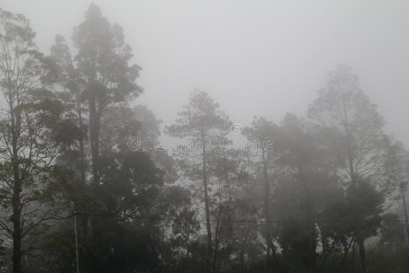 Загадочный лес стоковые изображения rf