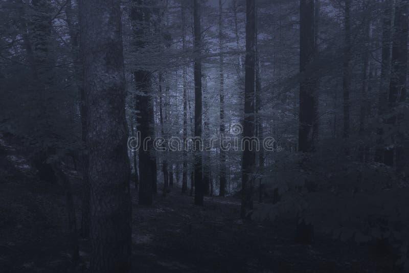 Загадочный туманный лес стоковые фото