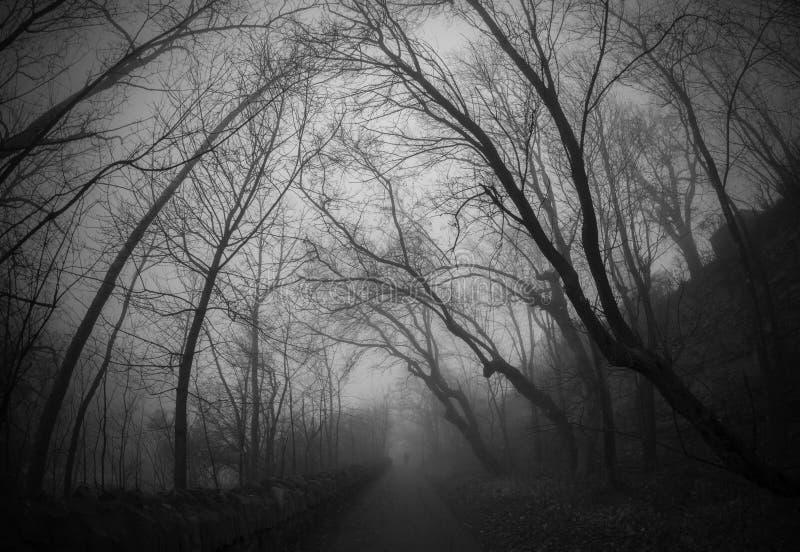 Загадочный туманный переулок стоковые изображения rf