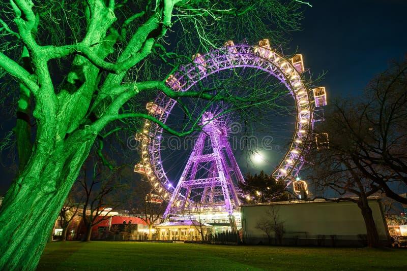 Загоренное колесо вены гигантское стоковая фотография