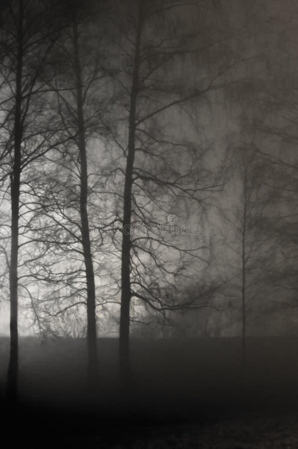 Загоренные нагие безлистные ветви, туманные силуэты деревьев, черная каменная стена, сцена ночи вертикального яркого Lit предпосы стоковые изображения rf