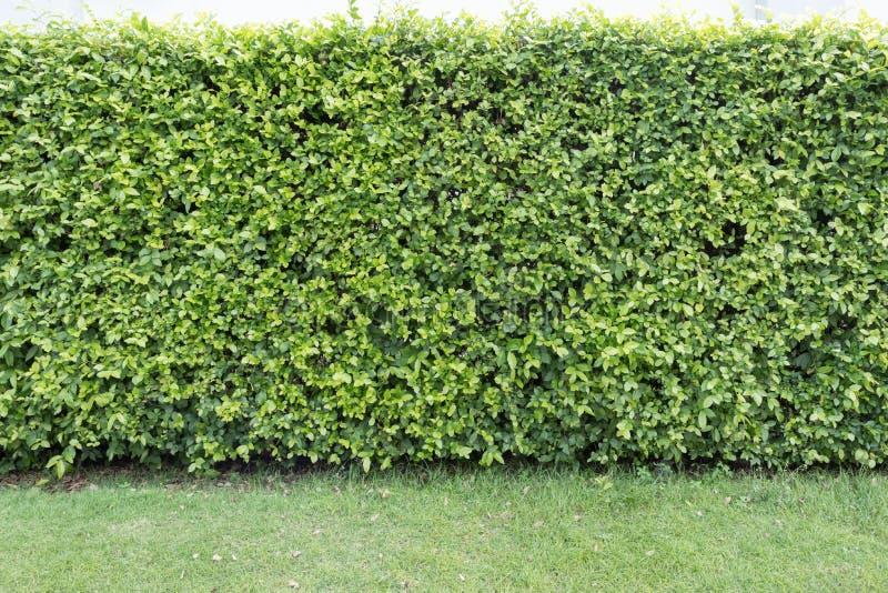 Загородка дерева дома стоковое фото