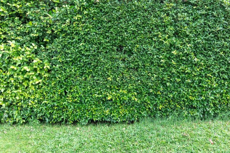 Загородка дерева дома стоковое изображение rf