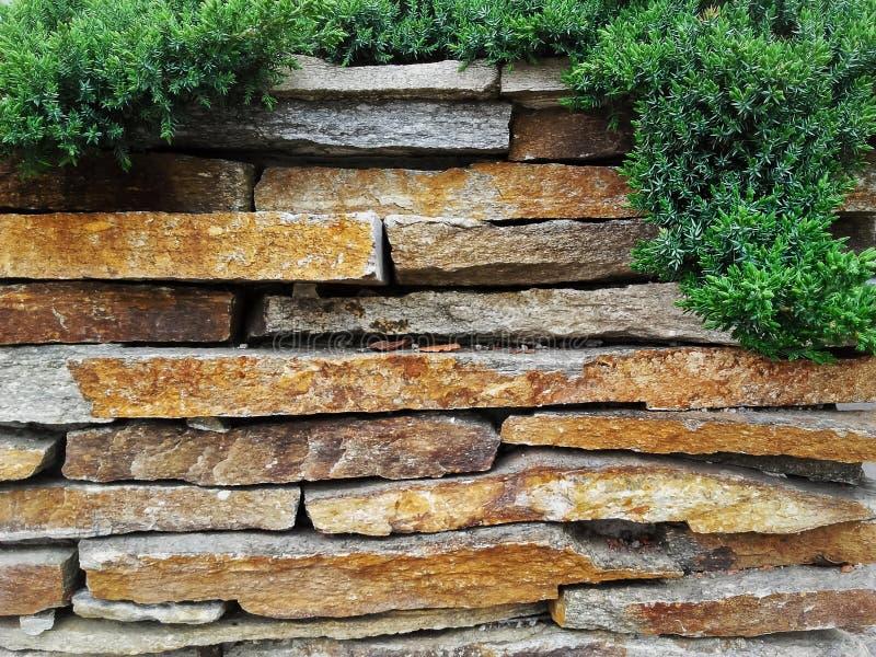 Загородка каменной стены сада декоративная естественная с вечнозеленым деревом стоковая фотография