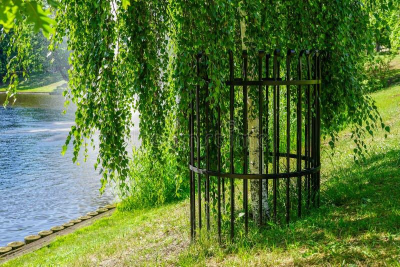 Загородка металла вокруг дерева для предотвращения повреждения бобра стоковое фото