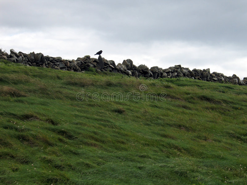 загородка птицы стоковое фото rf