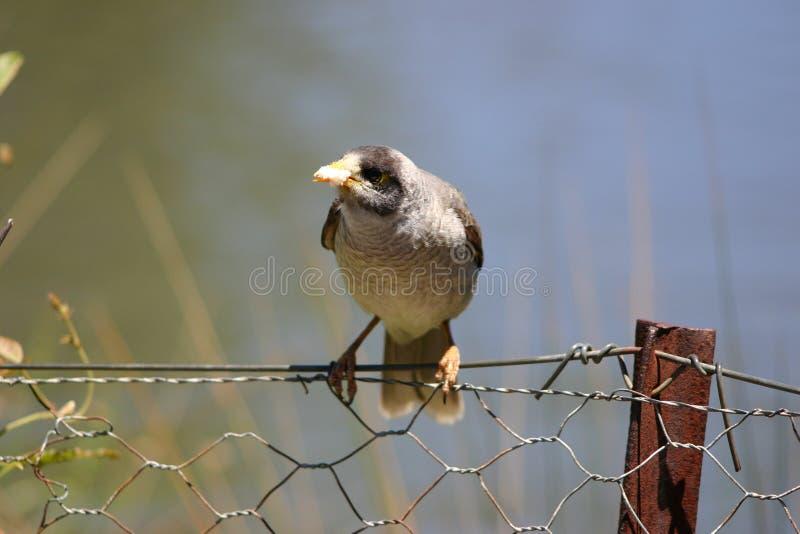 загородка птицы Стоковая Фотография