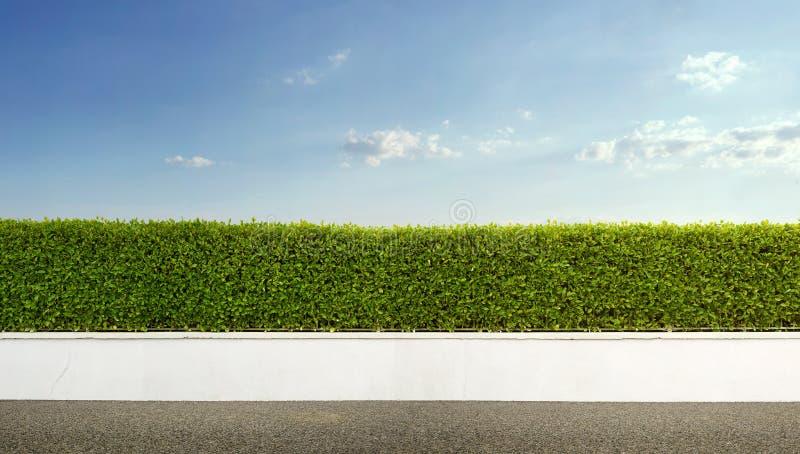 Загородка изгороди стоковое фото rf