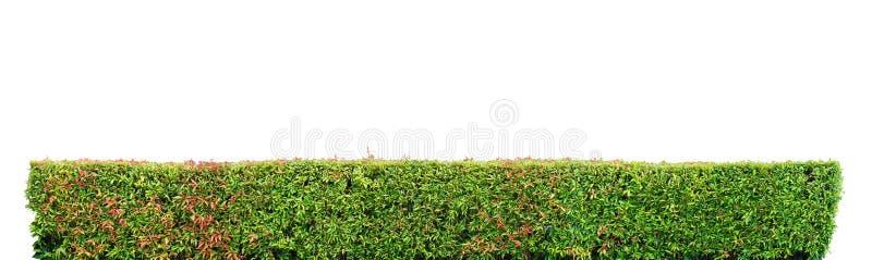 Загородка кустарника стоковая фотография