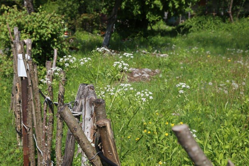 Загородка решетины стоковые фотографии rf