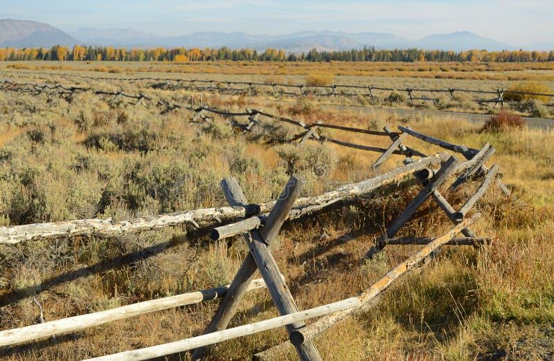 Загородка самца оленя стоковые фотографии rf