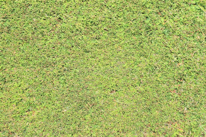 Загородка туи стоковое изображение