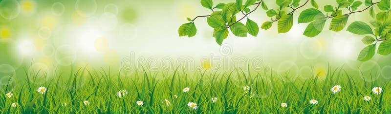 Заголовок хворостин бука травы предпосылки весны бесплатная иллюстрация