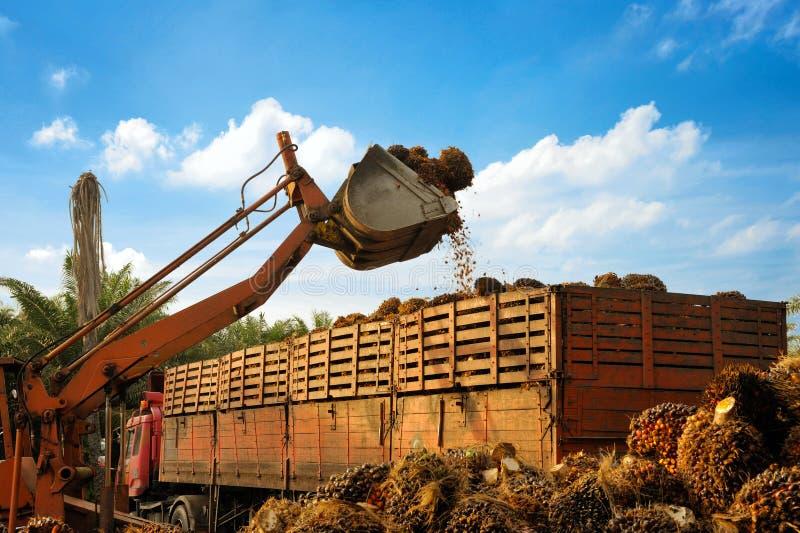 Загружать плодоовощи масличной пальмы стоковое изображение