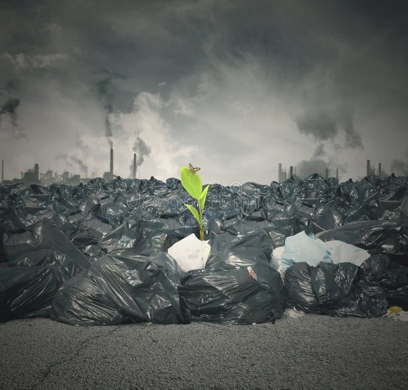 Загрязнение и новая жизнь стоковая фотография