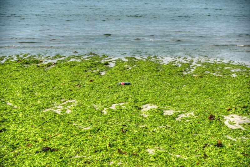 Загрязнение пластмасс пляжа seaweed стоковое изображение