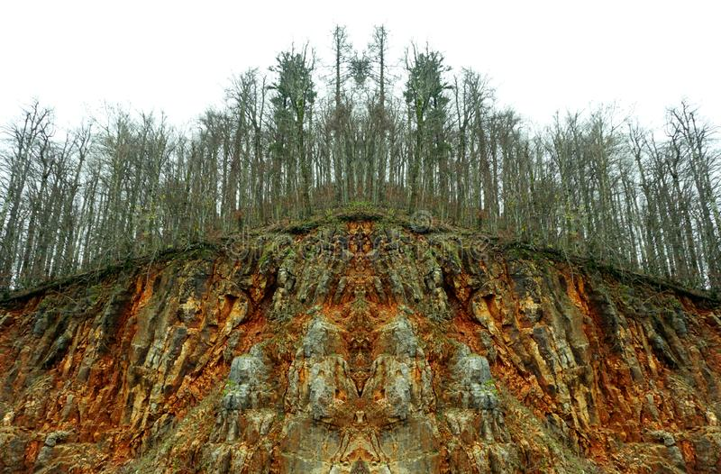 Загрязнение природы и последствия Абстрактный взгляд больного дерева в больном лесе после кислотного дождя стоковая фотография