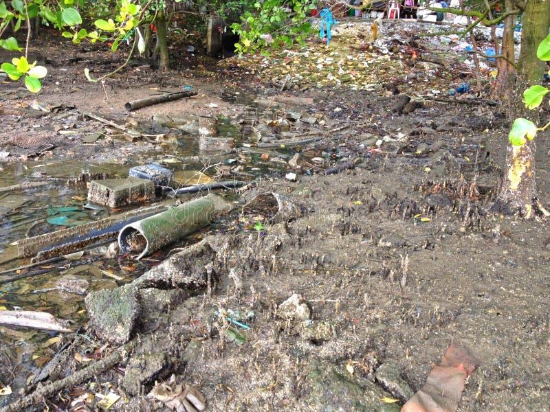 Загрязнянное болото мангровы стоковые изображения rf