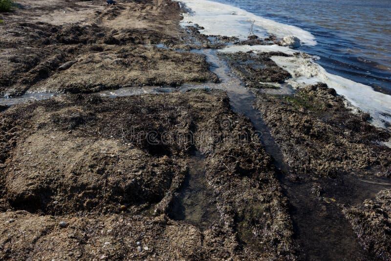 Загрязнянные воды берега - вымирание и заболевание стоковая фотография rf