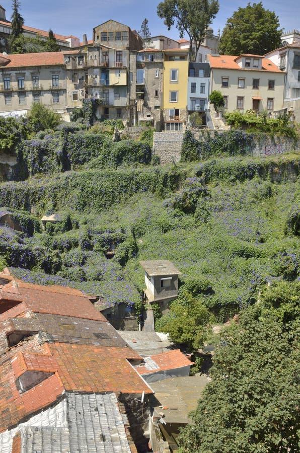 Загубленные дома над mauve холмом стоковые фото