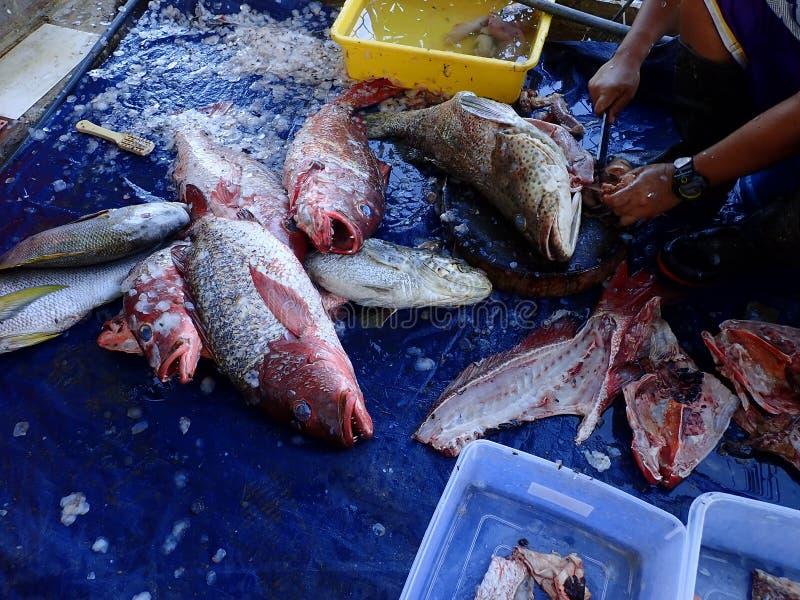 Задвижка дня и очищенных и свежих рыб готовых для того чтобы сварить стоковое фото rf