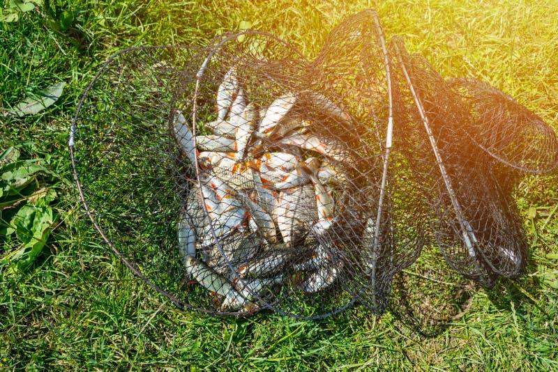 Задвижка рыб в сетчатой корзине на зеленой траве рекой Много ro стоковая фотография rf