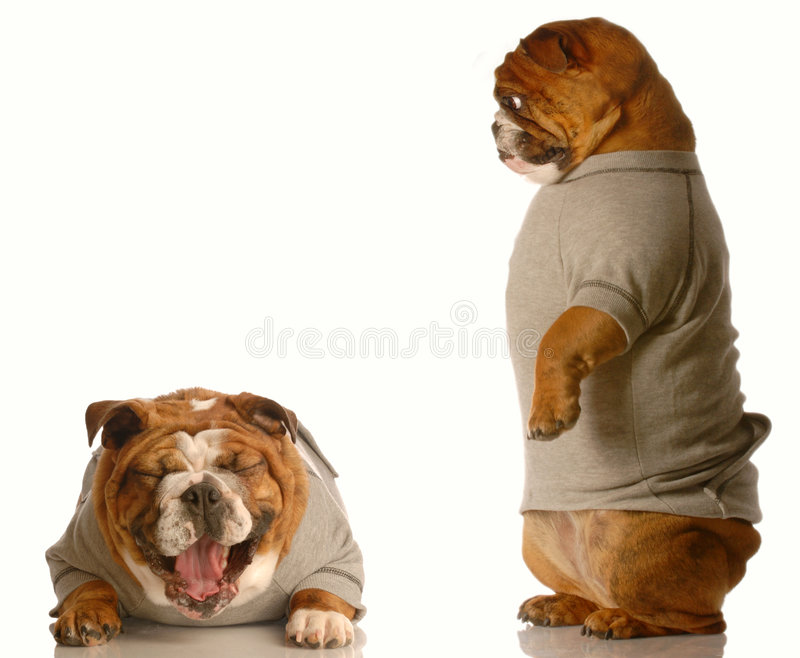 задирая собака стоковые изображения rf