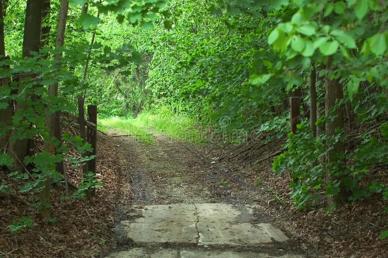 задние древесины дороги стоковая фотография rf