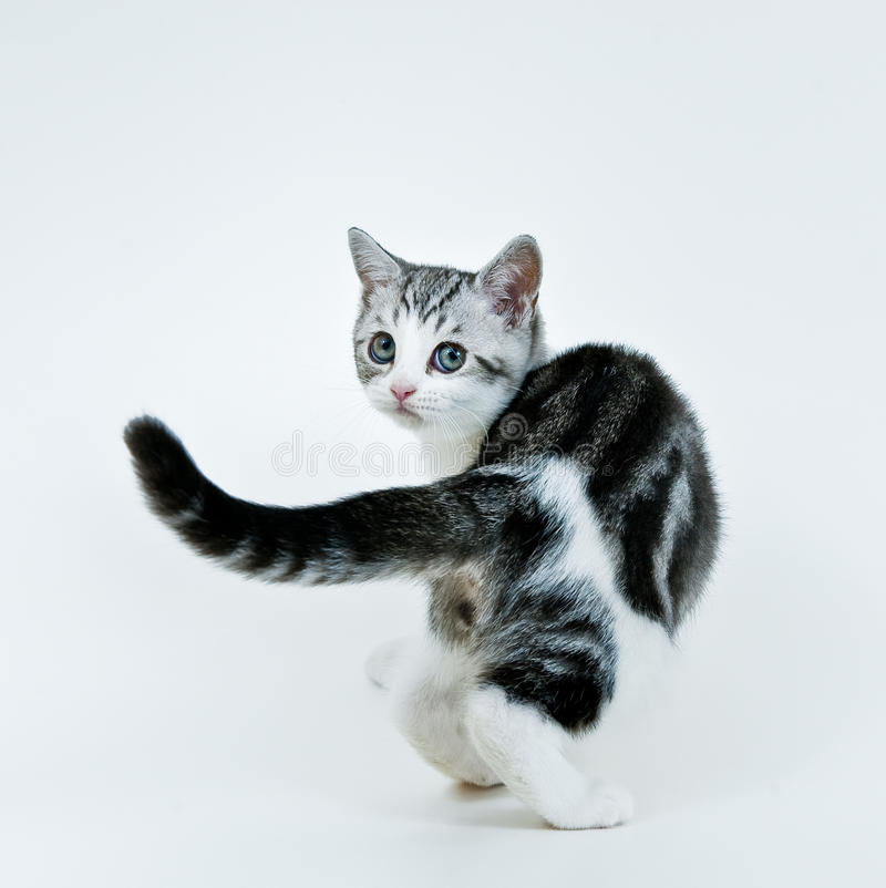 задний взгляд котенка стоковое фото