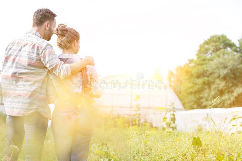 Задний вид мужчины, обнимающего свою жену на растениях, растущих на ферме, с желтой линзой, ярко замеркивает на заднем плане стоковые изображения rf