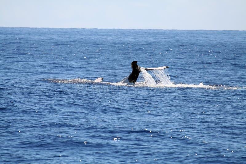 Download задний кит заплывания s стоковое изображение. изображение насчитывающей песня - 1183919
