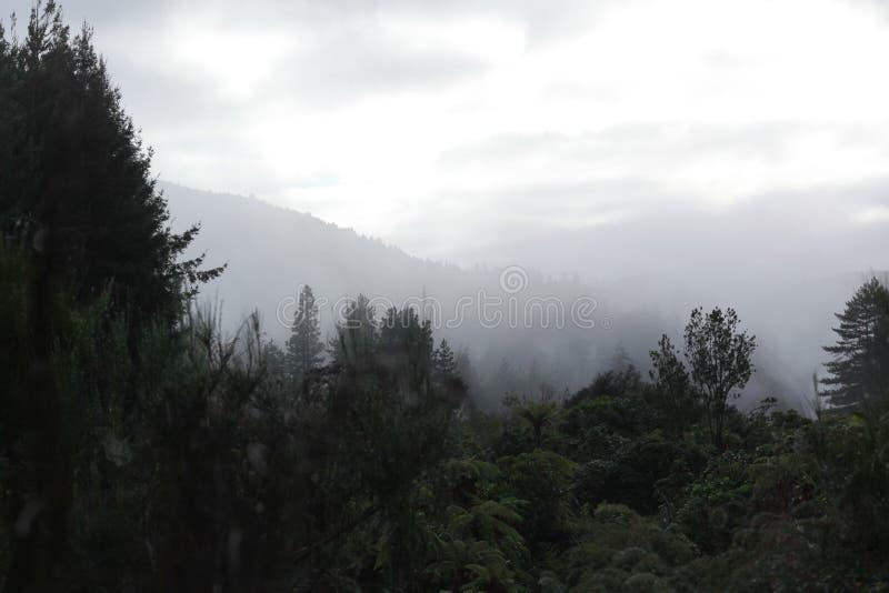Задний лес и крутой туман стоковое изображение rf