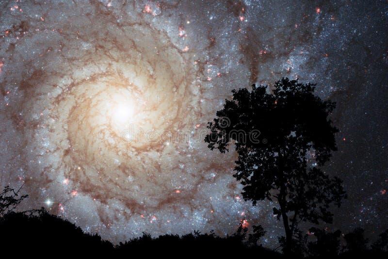 задняя часть галактики нерезкости sprial на дереве силуэта неба захода солнца облака ночи стоковые изображения
