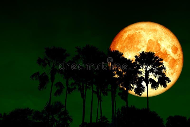 задняя часть луны полной крови над ладонями силуэта высокими в ночном небе стоковые изображения rf