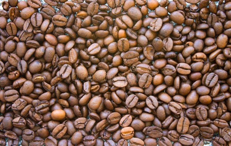 Зажаренная в духовке предпосылка крупного плана кофейных зерен arabica E стоковые фотографии rf