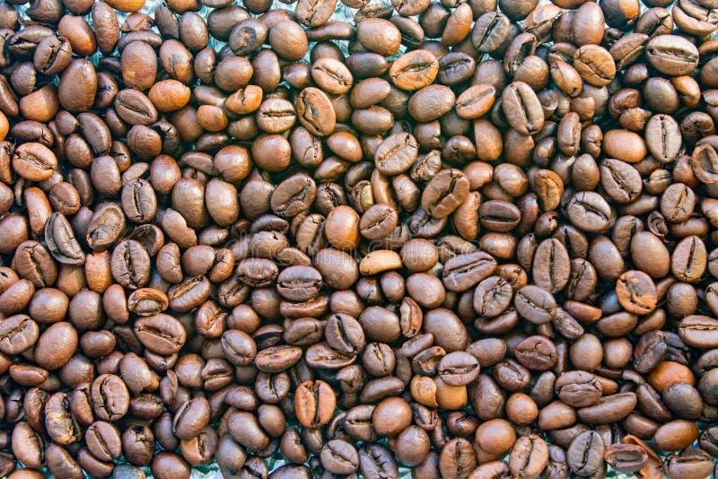 Зажаренная в духовке предпосылка крупного плана кофейных зерен arabica E стоковые фото