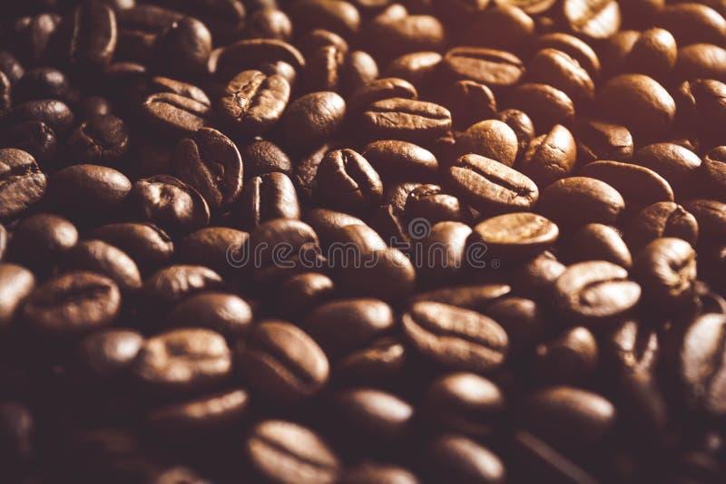 зажаренная в духовке свежая кофе фасолей предпосылки стоковые изображения rf