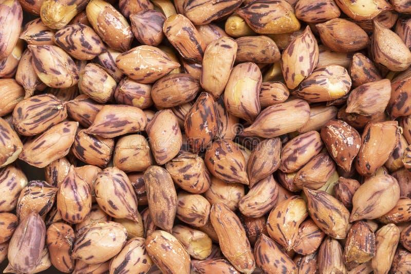 Зажаренные в духовке арахисы для предпосылки, тайское имя фасоли тигр-нашивки стоковое изображение