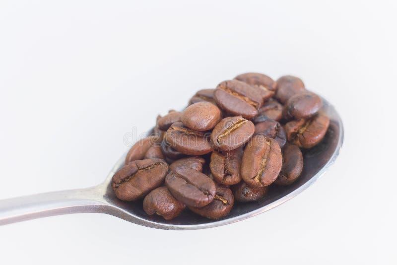 Зажаренные в духовке кофейные зерна в нержавеющей ложке на белом spac предпосылки стоковая фотография
