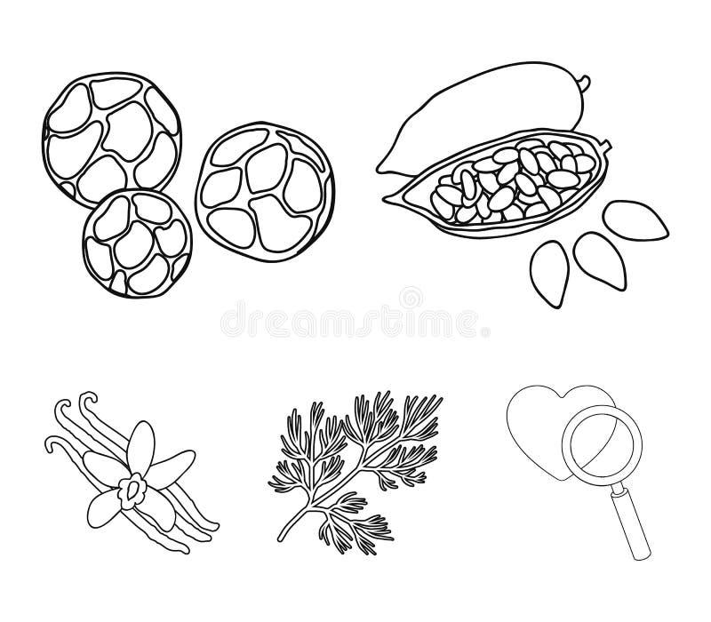 Зажаренные фасоли какао, укроп, черный перец, ваниль Травы и установленные специями значки собрания в плане вводят символ в моду  иллюстрация штока