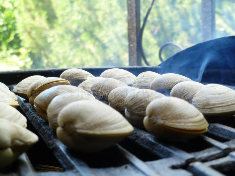 Зажаренные clams стоковая фотография
