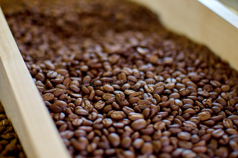 зажаренный в духовке кофе фасолей стоковые изображения