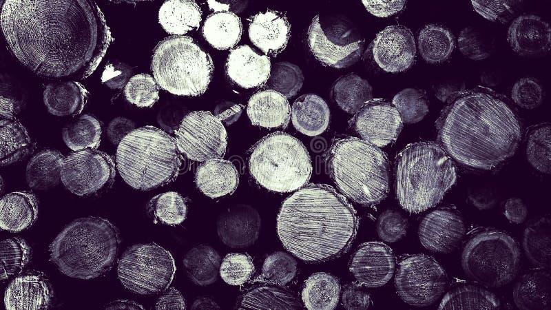 Зазор леса - деревянные балки как предпосылка природы стоковое фото