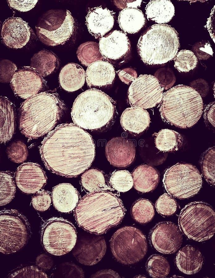Зазор леса - деревянные балки как предпосылка природы стоковое фото rf